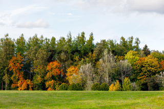 Autumn trees with yellow and orange leaves