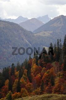 Herbstwald in den Bergen
