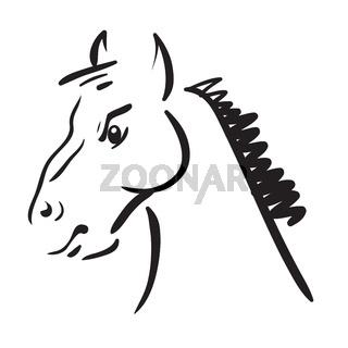 Horse on white background