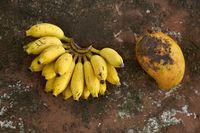 Colorful bananas and papaya