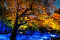Korakuen Garden Tokyo