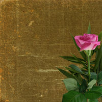 Grunge background for design with pink rose