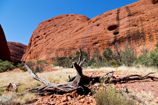 the outback canyon and the dead tree