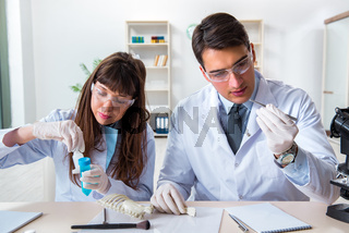 Paleontologists looking at bones of extinct animals