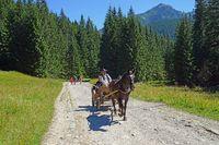Pferdekutsche  zur Chocholowska Lichtung, West Tatra, Polen.