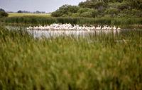 Pelican Colony Saskatchewan