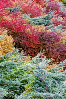 autumn colors composition in garden