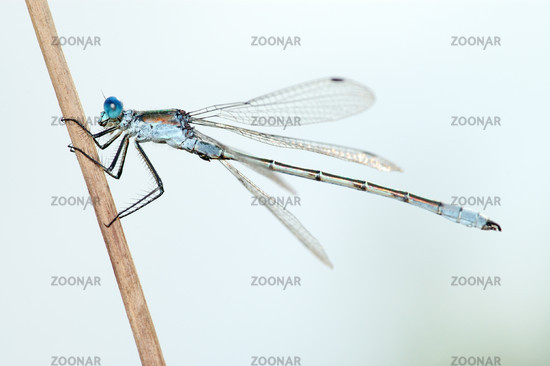 Dragonfly close