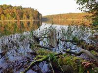 Uferlandschaft mit umgestürzten Bäumen