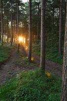 Morgens im Dünenwald