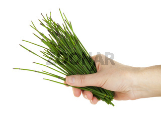 Hand and herb