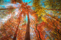 multi color trees in the autunm forest