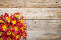 rustic wood background with mums