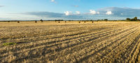Agricultural hay field with bales. Sunset light and blue sky. Panoramic view.