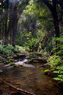 Bach auf Kauai