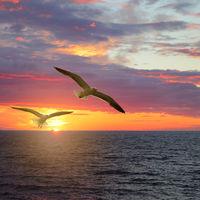 Scenic sunset seascape
