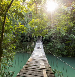 Tranquil Forest Footbridge