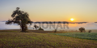 Countryside with morning mist at sunrise