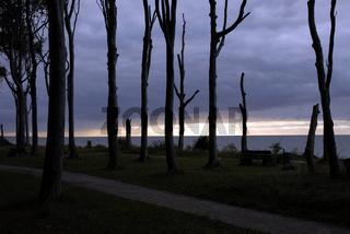 Nienstedter Geisterwald