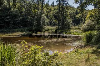 Hardtwaldsee im Wasserbachtal