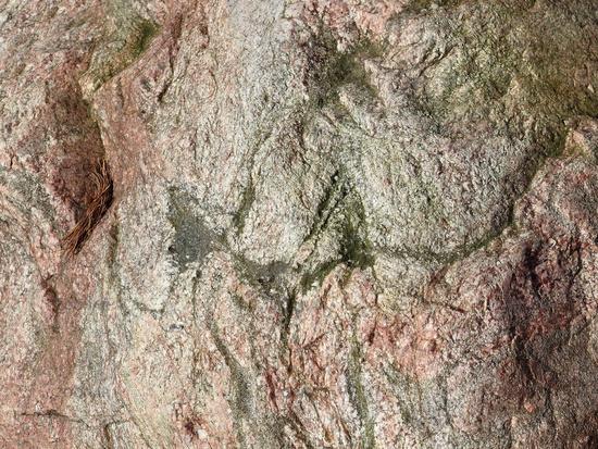 Oberfläche eines Findlings aus Migmatit, Nahaufnahme