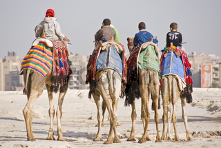 Vier Kamele four camels