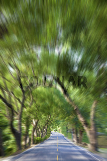 Driving through the Green Forest and road in motion blur