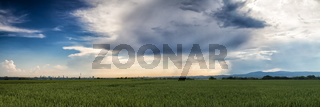 Panorama over a wheat field with a beautiful cloudscape