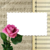 Musical background with pink rose for design