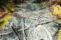 Whakarewarewa Forest Acidic Pools