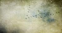 ziehende vögel textur konzept