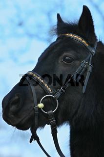 freches Pony