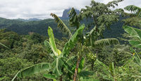 Regenwald, Sao Tome, Afrika
