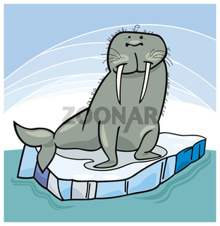 Walrus on floating ice