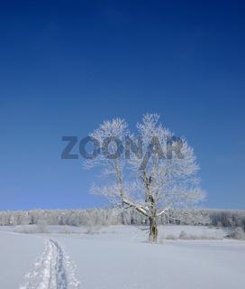 Winterlandschaft auf der Schwaebischen Alb