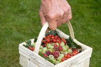 Geerntnete Früchte