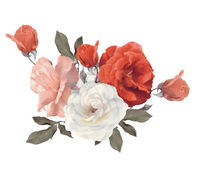 Roses watercolor on white background