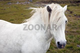 IS_Pferd_01.tif