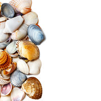Seashells on white with copy space