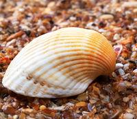 Seashell on wet sand