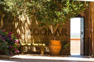 Innenhof mit Olivenbaum im Sonnenlicht,Nähe von Montalcino, Toskana