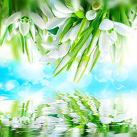 Beautiful snowdrops flower blossom, water reflection,sky, clouds, light. Greeting square card template. Soft toned. Nature spring background.