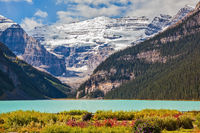Flowers on the bank of glacial Lake Louise