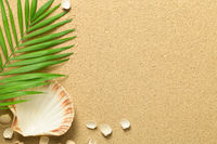 Summer Background with Green Palm Leaf and Shells