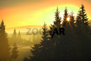 sunrise over mountain forest