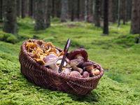 Pilzkorb mit verschiedenen Pilzarten