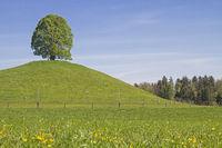 Laubbaum auf dem Veiglberg