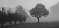Trees on a fogy autumn morning.