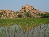 Rice field and granite mountain in Hampi, India. Popular place for rock climbing.