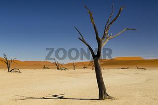 Deadvlei im Namib, Namibia, Afrika, Deadvlei in Namib, Namibia, Africa